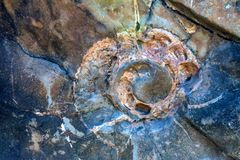 Ammonite απολίθωμα στην πέτρα στενή στοκ φωτογραφία με δικαίωμα ελεύθερης χρήσης