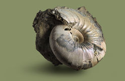 Ammonite - απολιθωμένο μαλάκιο Στοκ φωτογραφία με δικαίωμα ελεύθερης χρήσης
