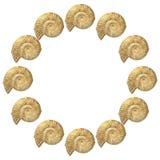 Ammonite Photographie stock libre de droits