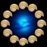 Ammonite Images stock