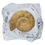 Ammonite Images libres de droits