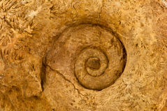 Ammonite Stock Photos