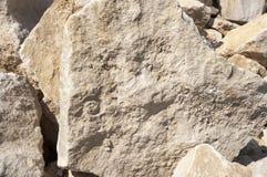 Ammonite Fotografie Stock Libere da Diritti
