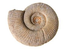 Ammonite Photo stock