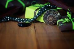 Ammonite avec des bijoux, des plumes et des boîte-cadeau Photographie stock libre de droits