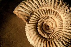 Ammonite background. Closeup of an ammonite prehistoric fossil on a ceramic textured background stock photography