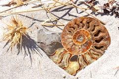 Ammonite en spirale Image libre de droits