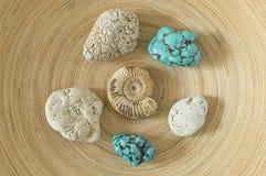 Ammonite et turquoise Photographie stock libre de droits
