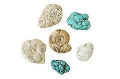 Ammonite et turquoise d'isolement sur un fond blanc Photos stock