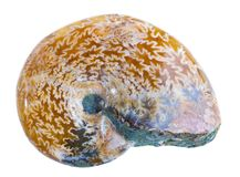 Ammonite Fossil Royalty Free Stock Photo
