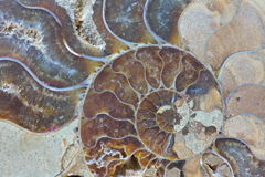 Ammonite fossil close-up. Close-up centre of ammonite with swirl pattern multi-coloured faceted texture textured Royalty Free Stock Image
