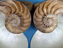 Ammonite Fossil Halves Stock Photo