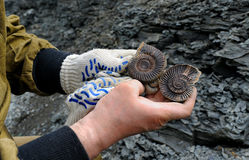 Ammonite - fossil mollusk. Ammonite – fossilized mollusk in the hands of the scientist. Ammonites lived in the ancient ocean 160 million years ago. Upper stock images