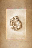 Ammonite Fossil. Rendered as antique sepia tone print framed against a warm sandstone texture background royalty free stock photos