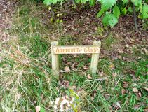 Ammonite garden. Signs leading the way in the sensory garden Royalty Free Stock Photography