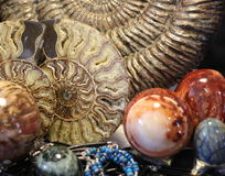 Ammonite. Lovely spiral shells of ammonite stock images