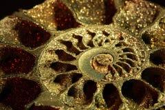 Ammonite, macro, inclinata Immagine Stock