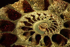 Ammonite, macro, inclined stock image