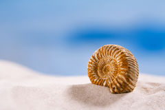 Ammonite nautilus shell  on white beach  sand Royalty Free Stock Photography