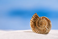 Ammonite nautilus shell  on white beach  sand Royalty Free Stock Images