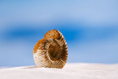 Ammonite nautilus shell  on white beach  sand Royalty Free Stock Photos