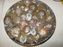 Ammonite. In plate stock photos