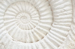 Ammonite prehistoric fossil. Closeup of an ammonite prehistoric fossil royalty free stock image