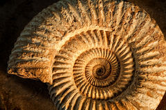 Ammonite with sidelight. Sidelit ammonite prehistoric fossil on a ceramic textured background Stock Image