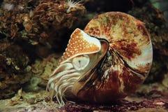 Ammoniten lizenzfreies stockbild