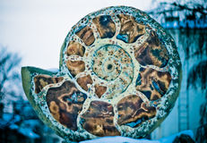 Ammonites μνημείων Στοκ φωτογραφίες με δικαίωμα ελεύθερης χρήσης