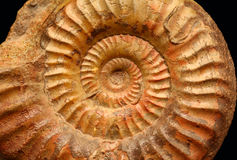 Ammonites Stock Photo