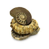 Ammonites Royalty Free Stock Image