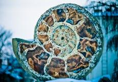 Ammonites de monument Photos libres de droits