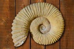 Ammonites fossiles à la Communauté Valencian Espagne Images stock