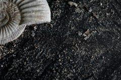 Ammonites partielles à l'arrière-plan noir, naturel, arénacé image libre de droits
