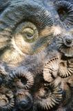 Ammoniti Fotografia Stock Libera da Diritti