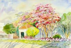 Aménagez la couleur en parc rose des fleurs de l'Himalaya sauvages de cerise Image stock