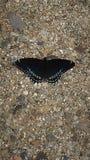 Amo Butterflys Fotografía de archivo libre de regalías