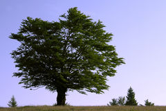 Amo del árbol Fotografía de archivo