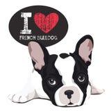 Amo el dogo francés Imagen de archivo libre de regalías
