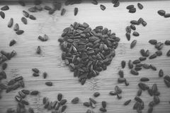 Amo i semi di girasole immagine stock libera da diritti