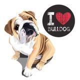 Amo il bulldog Immagine Stock
