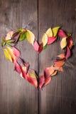 Amo l'autunno Immagini Stock Libere da Diritti