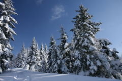 Amo l'inverno! immagine stock