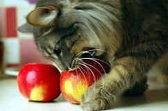 Amo, puedo hacer el ` real de la manzana del ` como en iphone Imagen de archivo libre de regalías