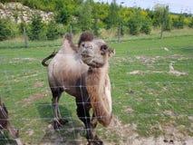 Amo viaje y el animal imagen de archivo libre de regalías