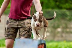 Amo y su perro obediente en un centro de formación del perro imagen de archivo