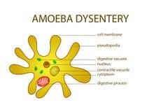 AMOEBA DYSENTERY Stock Photo