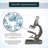 Amoebas κάτω από το μικροσκόπιο εργαστήριο επιστημονικό Διανυσματική απεικόνιση