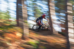 Amongst and Through the Trees. A male downhill Mountain Biker powers down the hill amongst the trees in sunlight stock photography